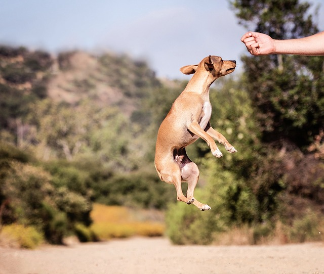 ea36b10820fc083ed1584d05fb1d4390e277e2c818b4154893f5c370a2e4 640 - Most Effective Strategies To Train Your Dog
