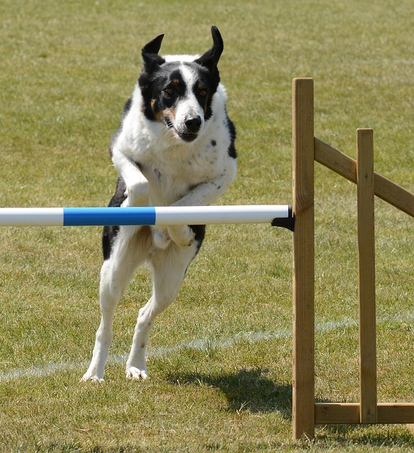 52e0d14b4253aa14f6da8c7dda793278143fdef8525474417d2d79dc9f4a 640 - Training Your Dog:  Proven, Useful Hints And Tips