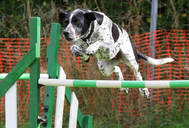 52e0d14b4253a414f6da8c7dda793278143fdef852547749702e73d3924c 640 - Awesome Dog-Training Tips For The Average Joe