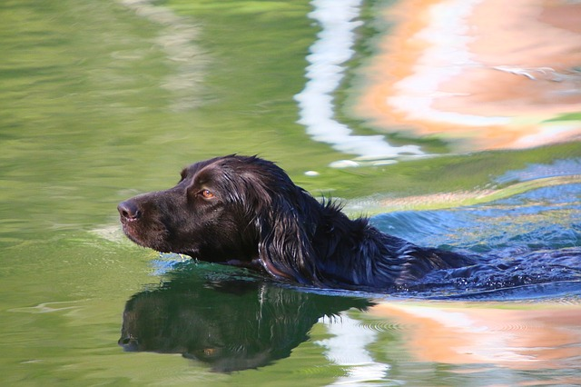 57e7dc434a56aa14f6da8c7dda793278143fdef8525477497d2972d09f4c 640 1 - You Can Take A Well-Trained Dog Anywhere