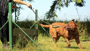57e5d4444e57a514f6da8c7dda793278143fdef85254774b70297ad1944b 640 - Tips And Tricks On How To Train Your Dog Correctly