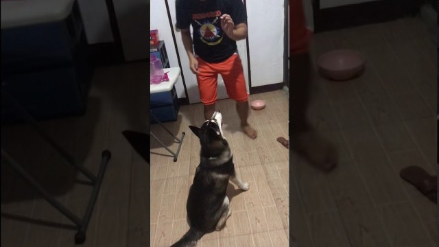 Dog Training 101 HARU -