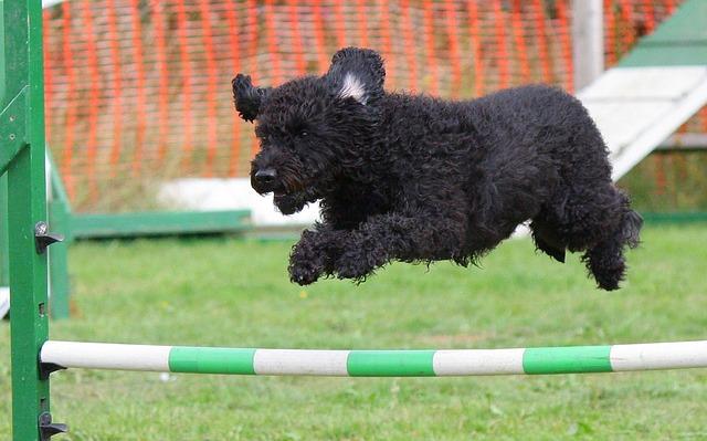 57e9d0474e56b108f5d08460962d317f153fc3e45657744c74287dd29f 640 2 - Good Dog- Bad Dog- The Basics Of Training