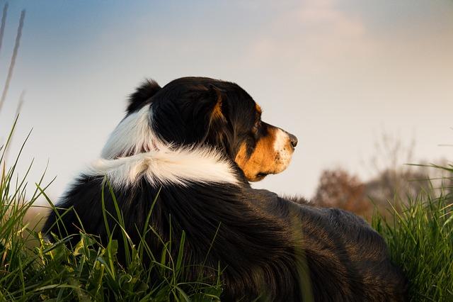 54e8d2424353a814f6da8c7dda793278143fdef852547741742773d3974e 640 1 - Training Your Dog To Be A Great Companion