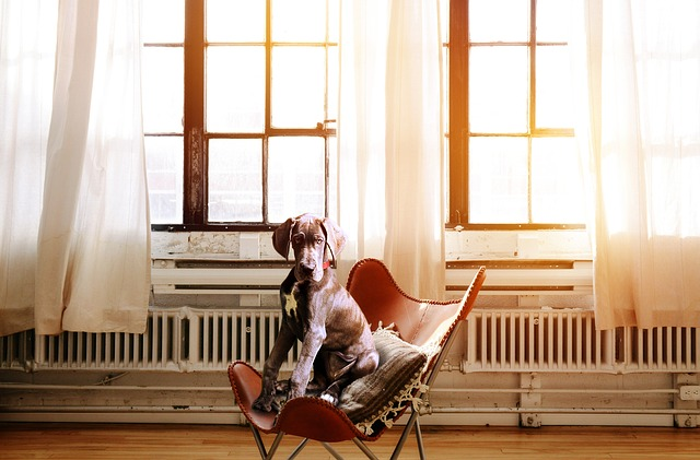 54e8d2424353a814f6da8c7dda793278143fdef852547741742773d3974e 640 - Training Your Dog To Be A Great Companion