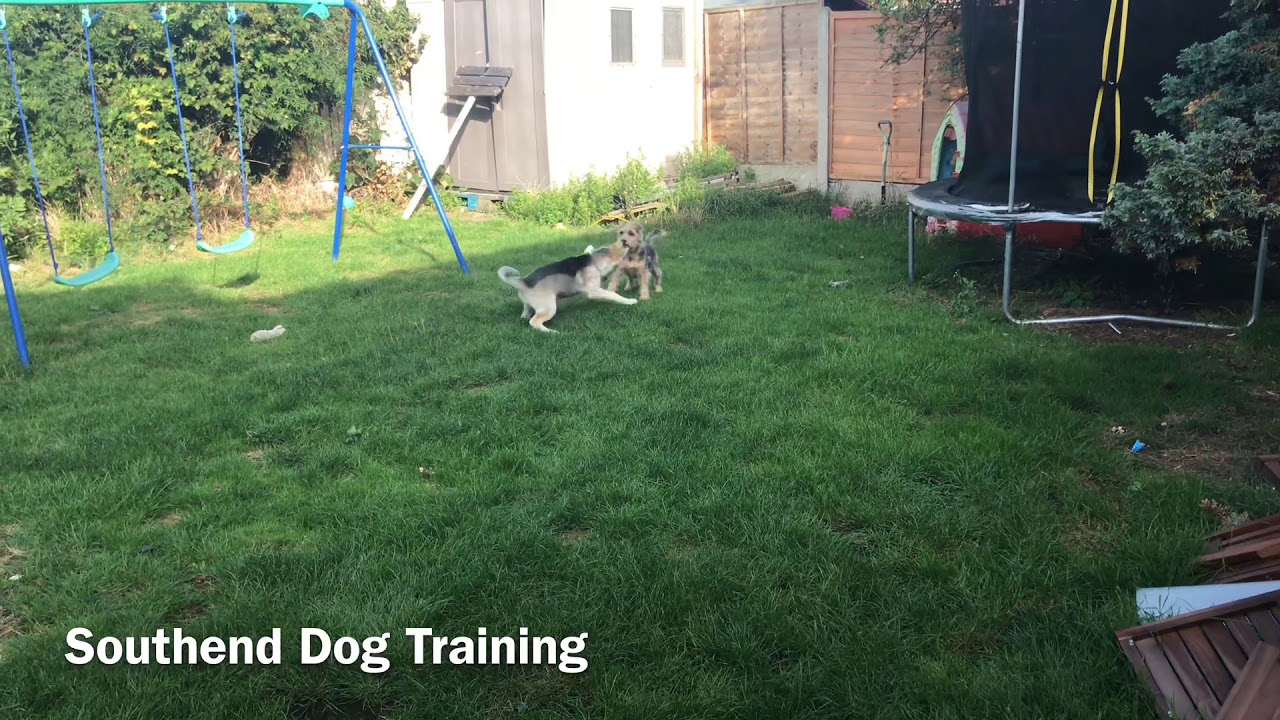 CORRECTIONS ARE UNNECESSARY IN DOG TRAINING  - CORRECTIONS ARE UNNECESSARY IN DOG TRAINING ????