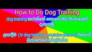 stay. tr dog training.... - stay. tr dog training....