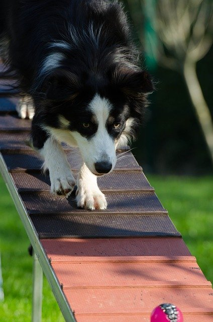 55e3d544425aa514f6da8c7dda793278143fdef85254764d752979d09249 640 1 - Puppy Training Tips For The New Dog Trainer