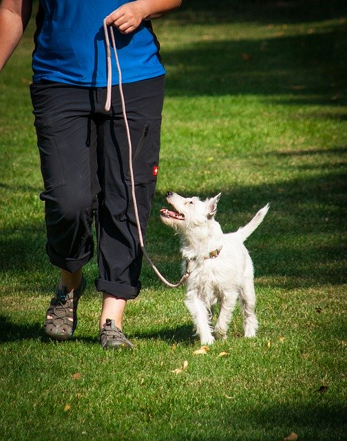 55e8d14a4d54ad14f6da8c7dda793278143fdef85254764a722f7ddd964b 640 1 - Excellent Tips To Make Canine Training As Easy As Possible!