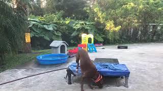Dog training 3 - Dog training