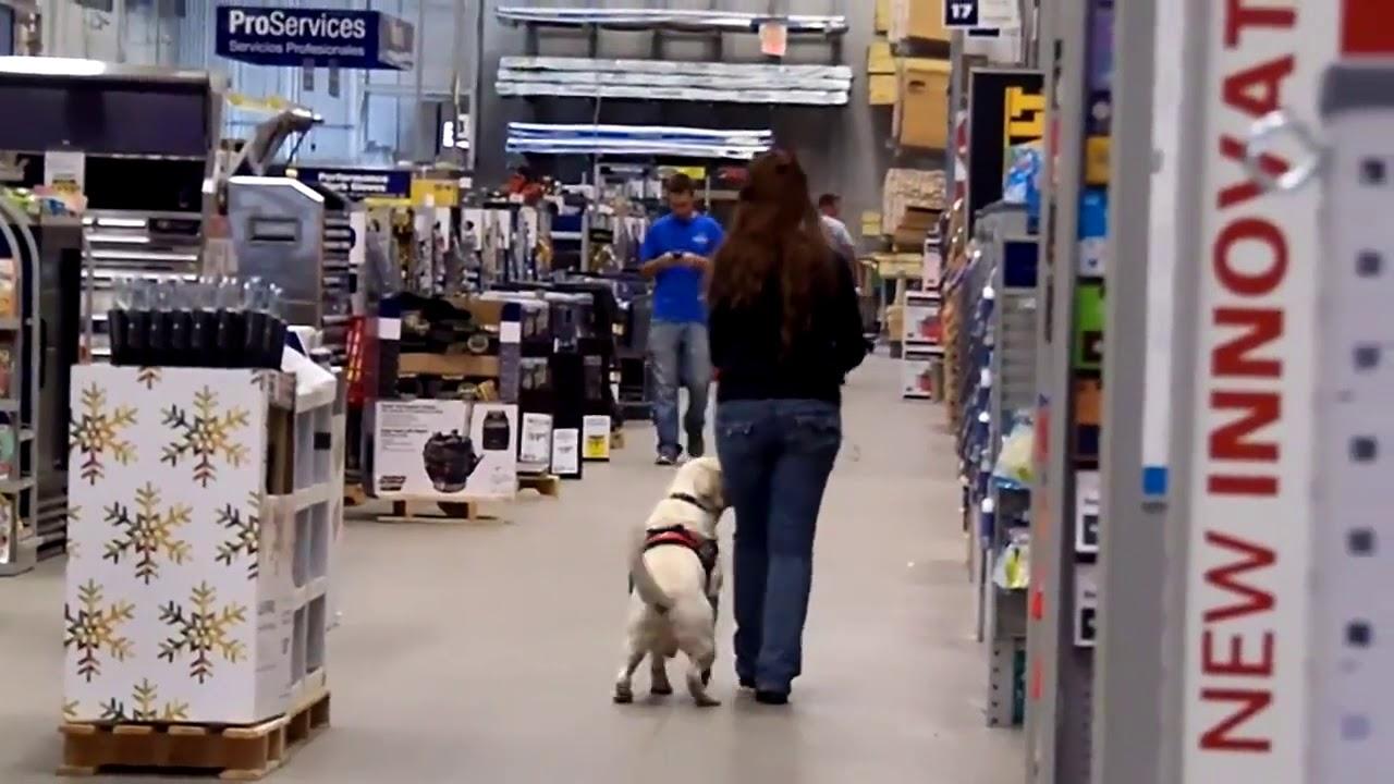 Dog training 4 - Dog training