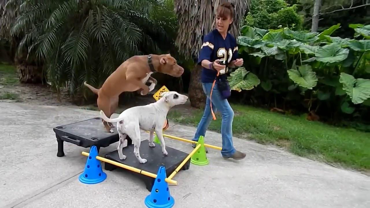 Dog training 6 - Dog training