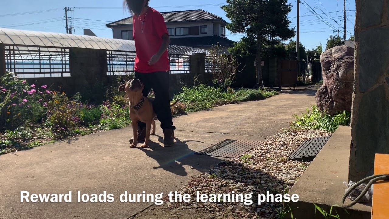 Tactical Dog Training Day 1. Between The Legs - Tactical Dog Training Day 1. Between The Legs