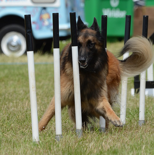 52e3d6404951a514f6da8c7dda793278143fdef85254764c732979d2934b 640 - The Best Tips For Training Your Dog