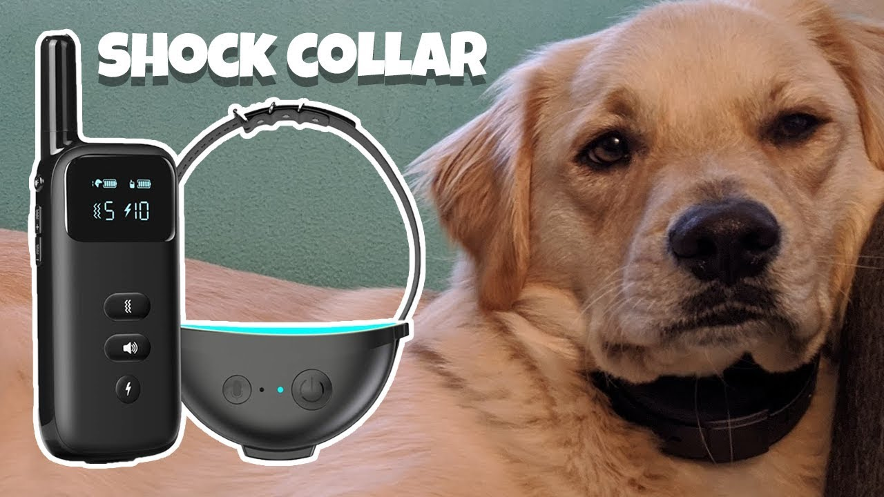 Dog Shock Collar Review Petoffers Dr. Trainer Shock Collar Dog Training Collar - Dog Shock Collar Review // Petoffers Dr. Trainer Shock Collar // Dog Training Collar