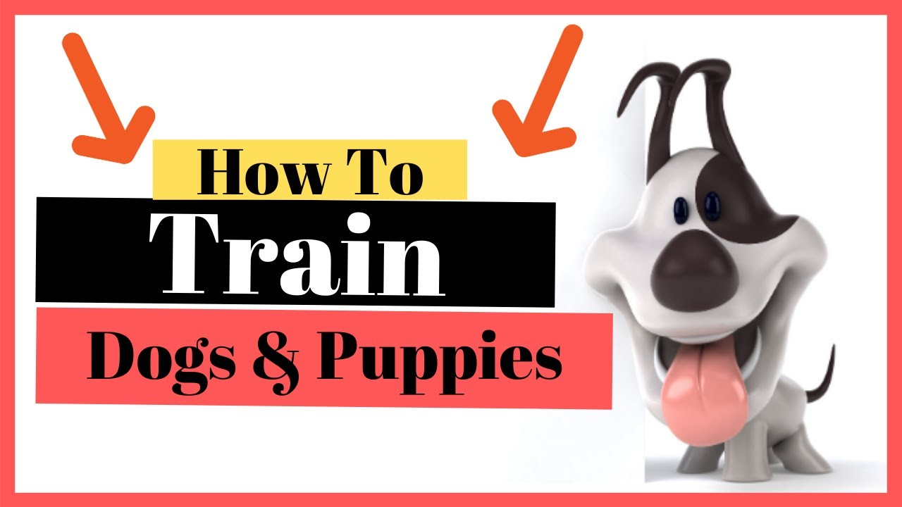 How To Train dogs and puppies Puppy and Dog Training Tips - How To Train dogs and puppies - Puppy and Dog Training Tips