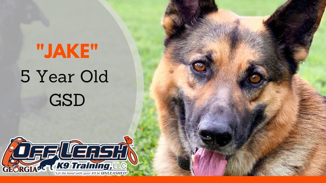 Jake 5 Year Old German Shepherd Dog Training Atlanta Board Train Program - Jake | 5 Year Old German Shepherd | Dog Training Atlanta | Board & Train Program