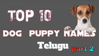 Top 10 India Dog Names in 2020 Rottweiler Dog Training Telugu - Top 10 India Dog Names in 2020   Rottweiler Dog Training Telugu