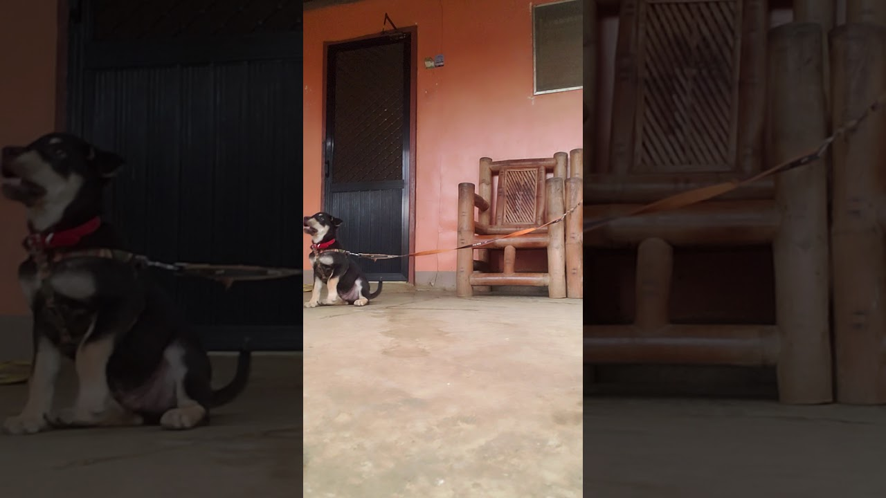 dog training for first time - dog training for first time