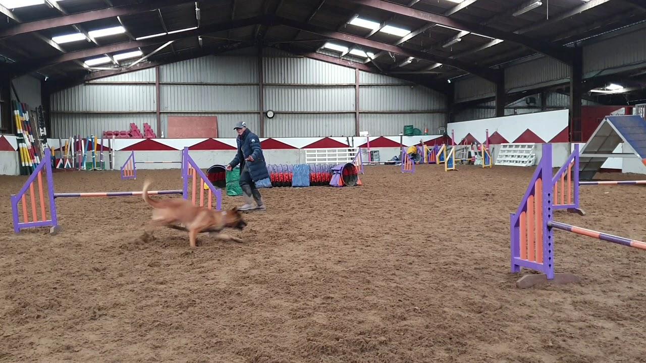 Dog Agility junior dog training - Dog Agility junior dog training
