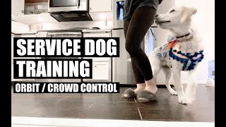 Service Dog Training Orbit Crowd Control - Service Dog Training - Orbit / Crowd Control