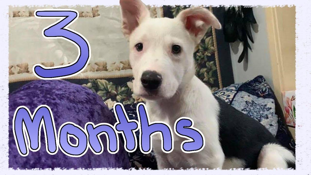 Assistance Dog Training 3 Months Old - Assistance Dog Training | 3 Months Old