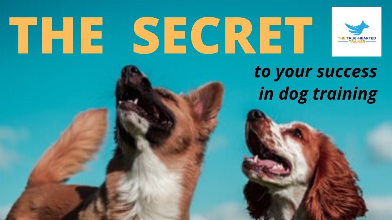 THIS IS THE SECRET TO YOUR SUCCESS IN DOG TRAINING - THIS IS THE SECRET TO YOUR SUCCESS IN DOG TRAINING