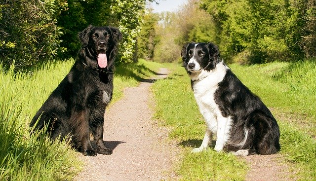 how to train any dog any time - How To Train Any Dog Any Time
