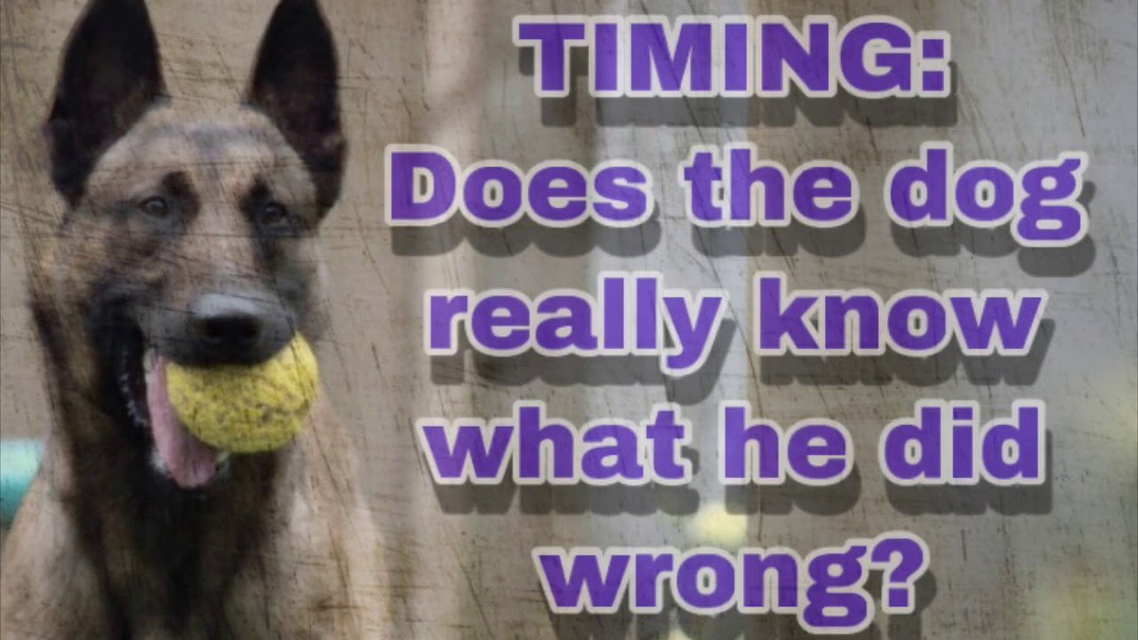 Do you really need to catch them in the act Dog Training - Do you really need to catch them in the act?? Dog Training