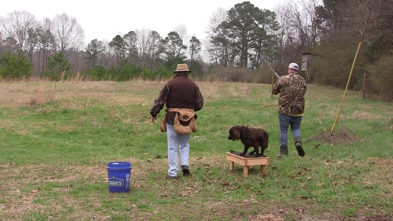 Doc Duck Dog Training Positive Methodology 2 16 20 - Doc - (Duck Dog Training) Positive Methodology 2-16-20
