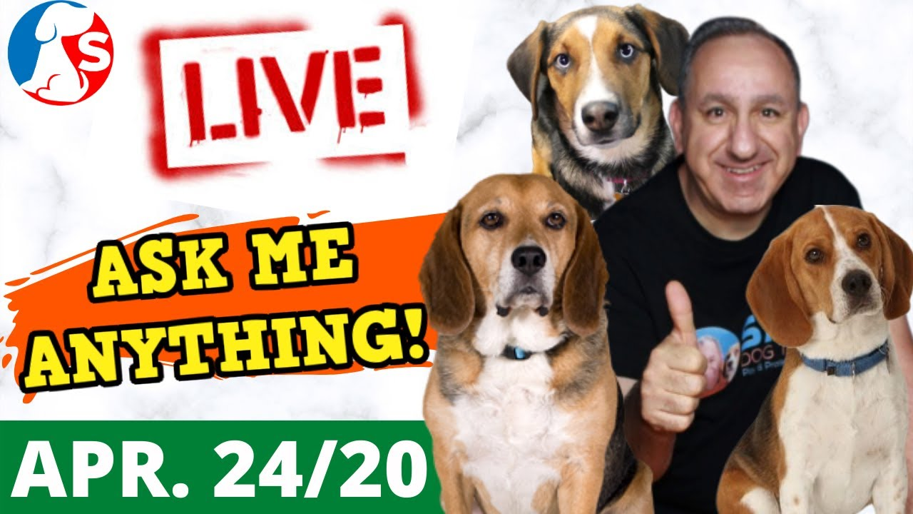 Can you train dogs without treats Dog training QA with Saro Dog Training - Can you train dogs without treats? Dog training Q&A with Saro Dog Training