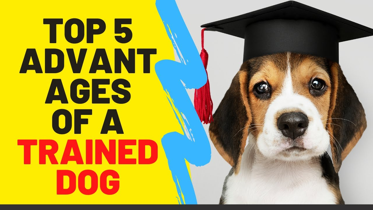 Dog Training TOP 5 Advantages Of A Trained Dog - Dog Training: TOP 5 Advantages Of A Trained Dog