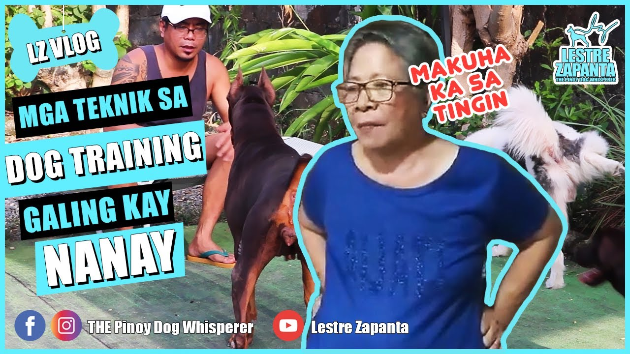 LZ VLOG 5 Dog Training Techniques my Mother taught me - LZ VLOG: 5 Dog Training Techniques my Mother taught me