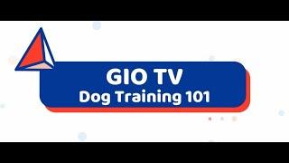 Dog Training 101 part 2 - Dog Training 101 part 2