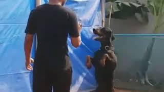 Expert Dog Training contact 7638829972 - Expert Dog Training (contact # 7638829972#)