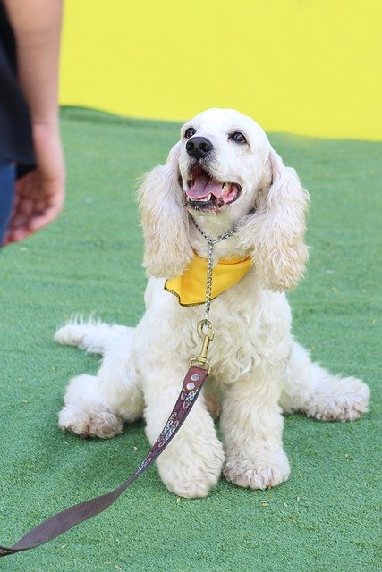 cool tips for successful training your dog - Cool Tips For Successful Training Your Dog