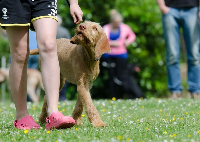 dog training tips that will work for you 2 - Dog Training Tips That Will Work For You