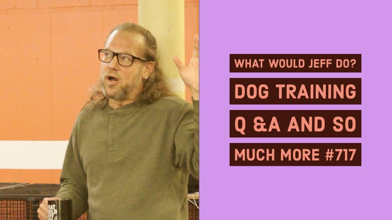 What Would Jeff Do Dog Training Dog Training Q A and so much more 717 - What Would Jeff Do? Dog Training Dog Training Q & A and so much more #717