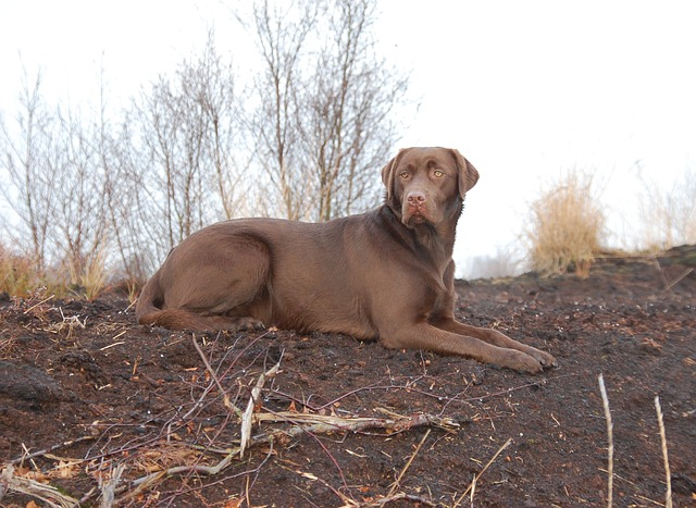 training your dog check out this advice - Training Your Dog? Check Out This Advice!