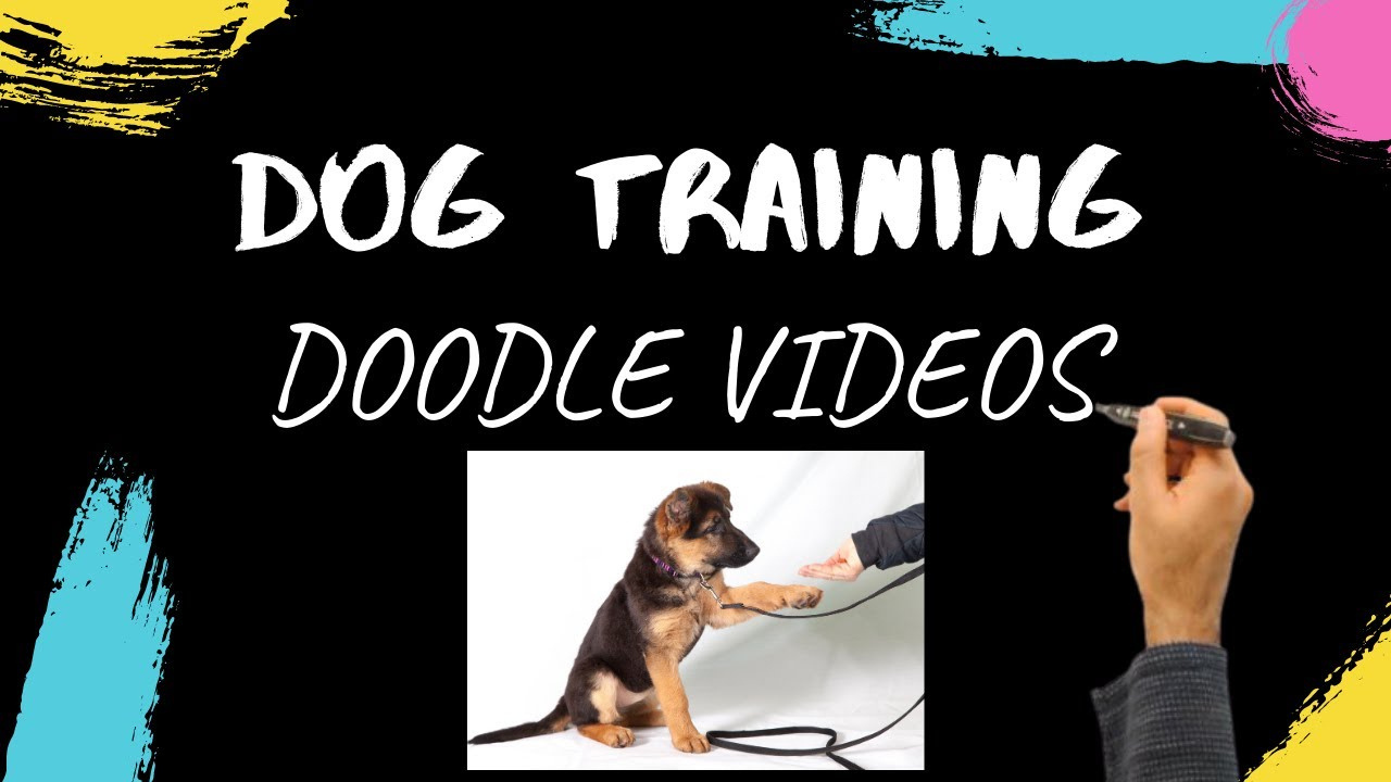 Dog Training Videos Dog Training Doodle Videos - Dog Training Videos - Dog Training Doodle Videos