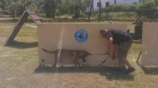 K9 POLICE DOG Volos Dog Training Center - K9 POLICE DOG | Volos Dog Training Center