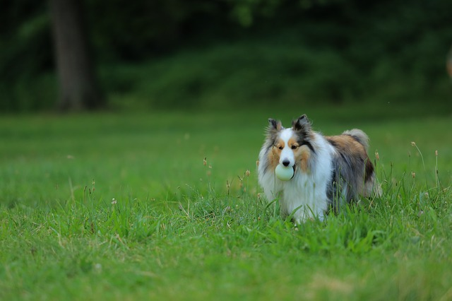 dog training tips straight from the experts - Dog Training Tips Straight From The Experts