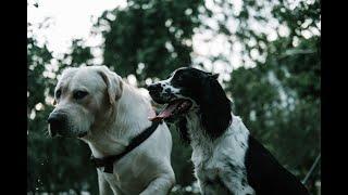 how to train a dog dog training puppy training 13 - how to train a dog, dog training, puppy training 13