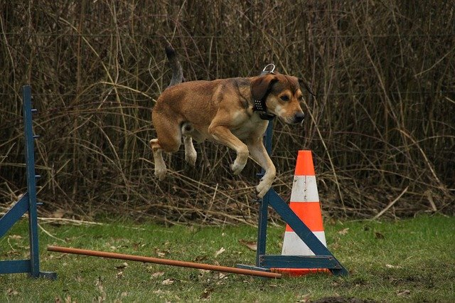 does your dog misbehave try these training tips - Does Your Dog Misbehave? Try These Training Tips!
