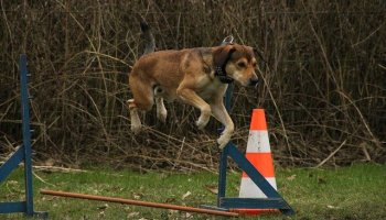 does your dog misbehave try these training tips - Does Your Dog Know What To Expect From You?