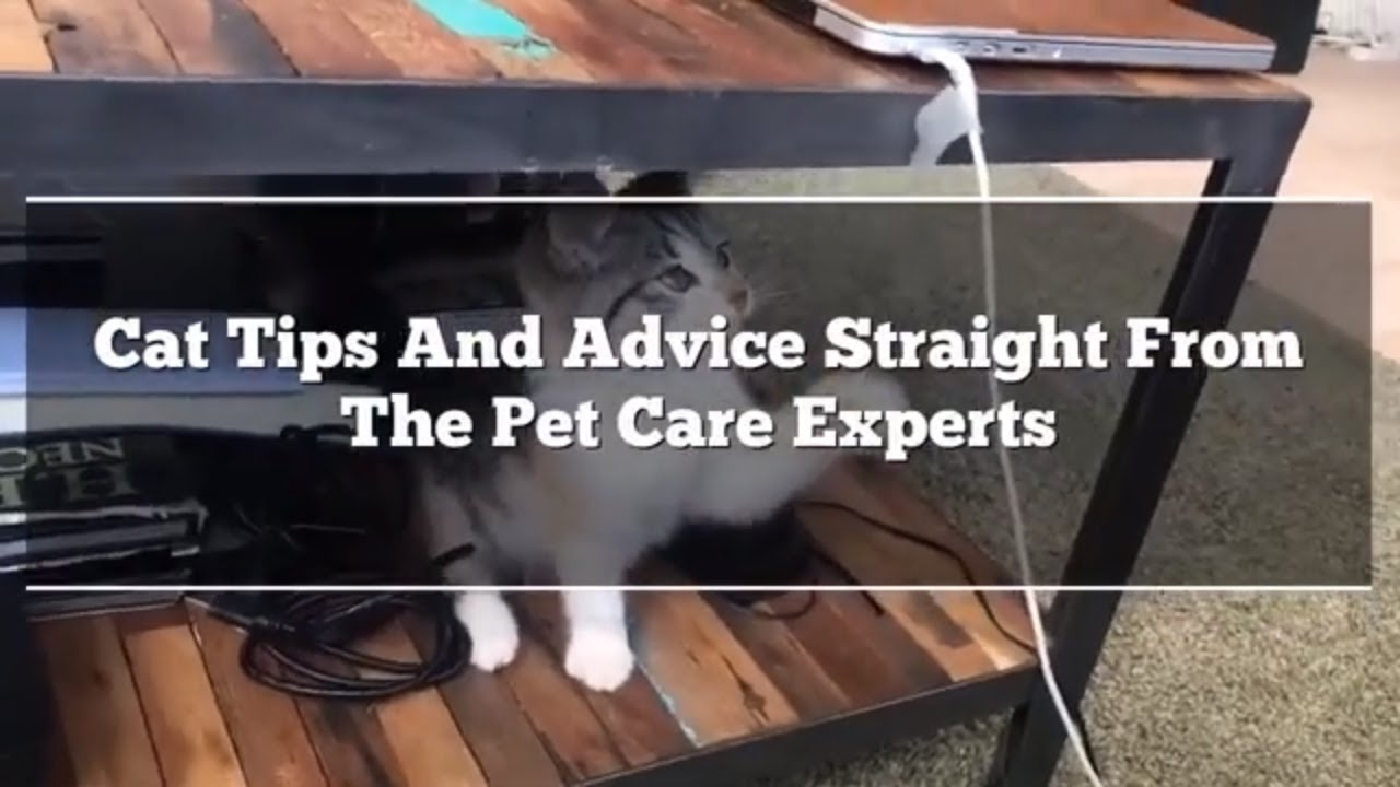 maxresdefault - Cat Tips And Advice Straight From The Pet Care Experts