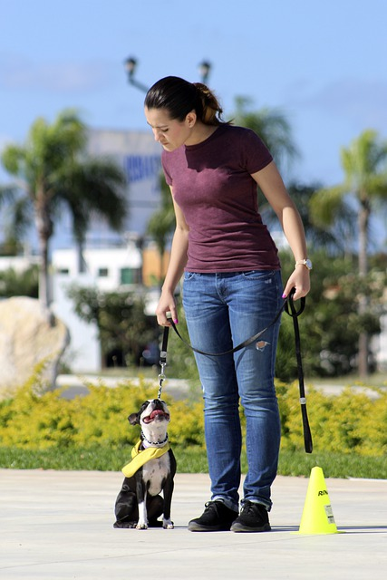 training your dog tips for the new dog trainer 1 - Training Your Dog Tips For The New Dog Trainer