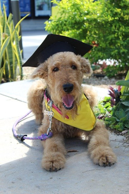 try these ideas to train your new dog - Try These Ideas To Train Your New Dog