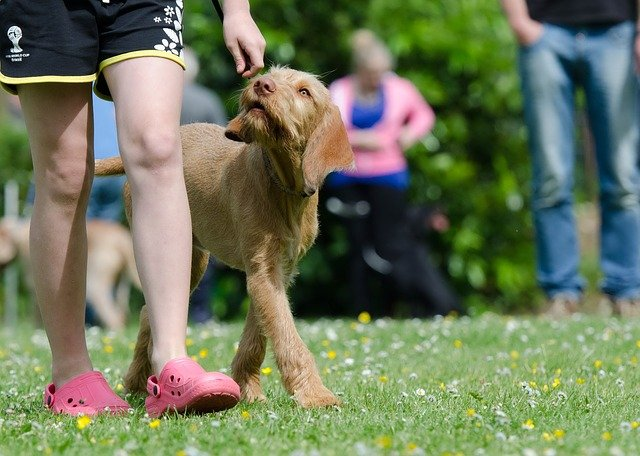 important steps with your canine training strategy - Important Steps With Your Canine Training Strategy