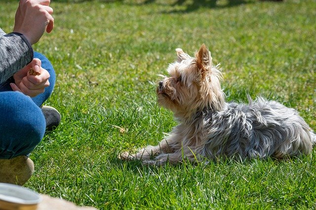 learning a few dog training tips will help 1 - Learning A Few Dog Training Tips Will Help